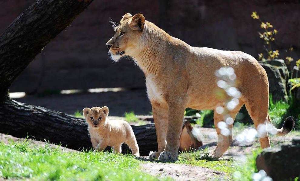 Животные и их детеныши • новости в