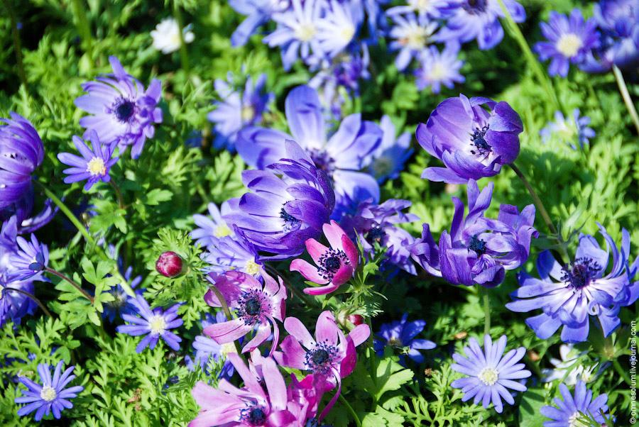 Парк цветов Кёкенхоф