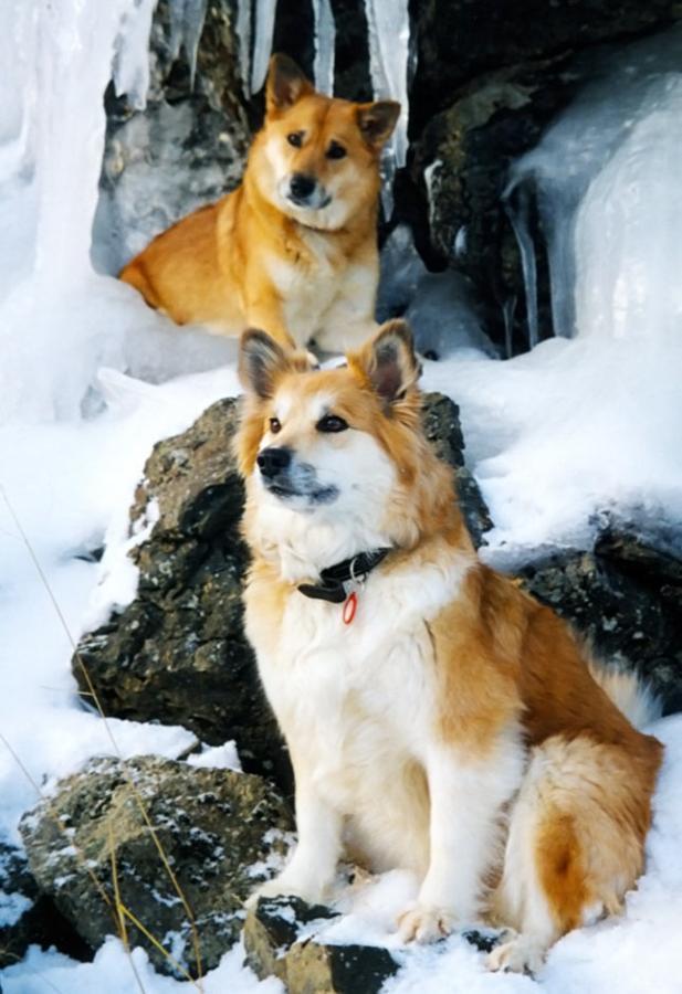 4 Необычные породы собак