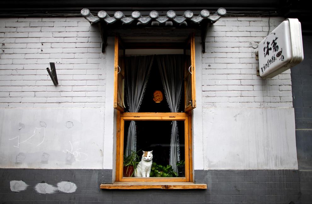 Сцены китайской жизни