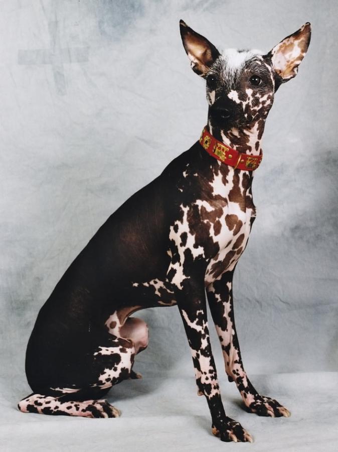 5 Необычные породы собак