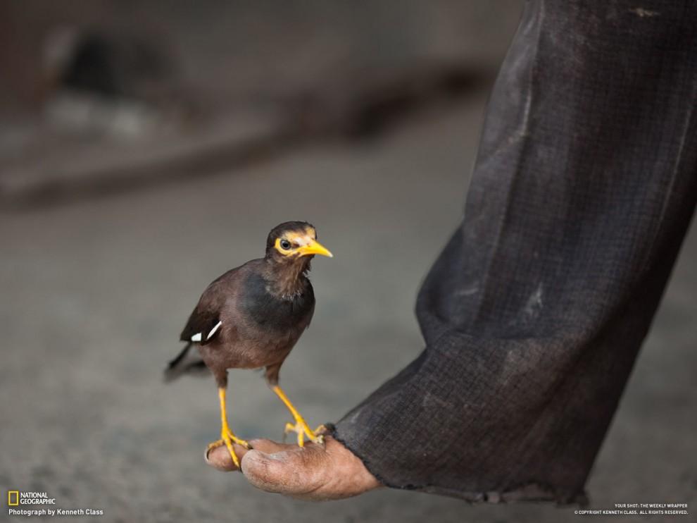 Обои от National Geographic