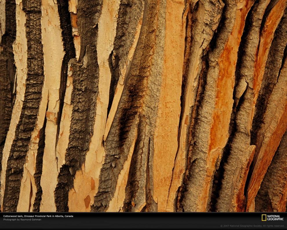 Узоры в природе: деревья