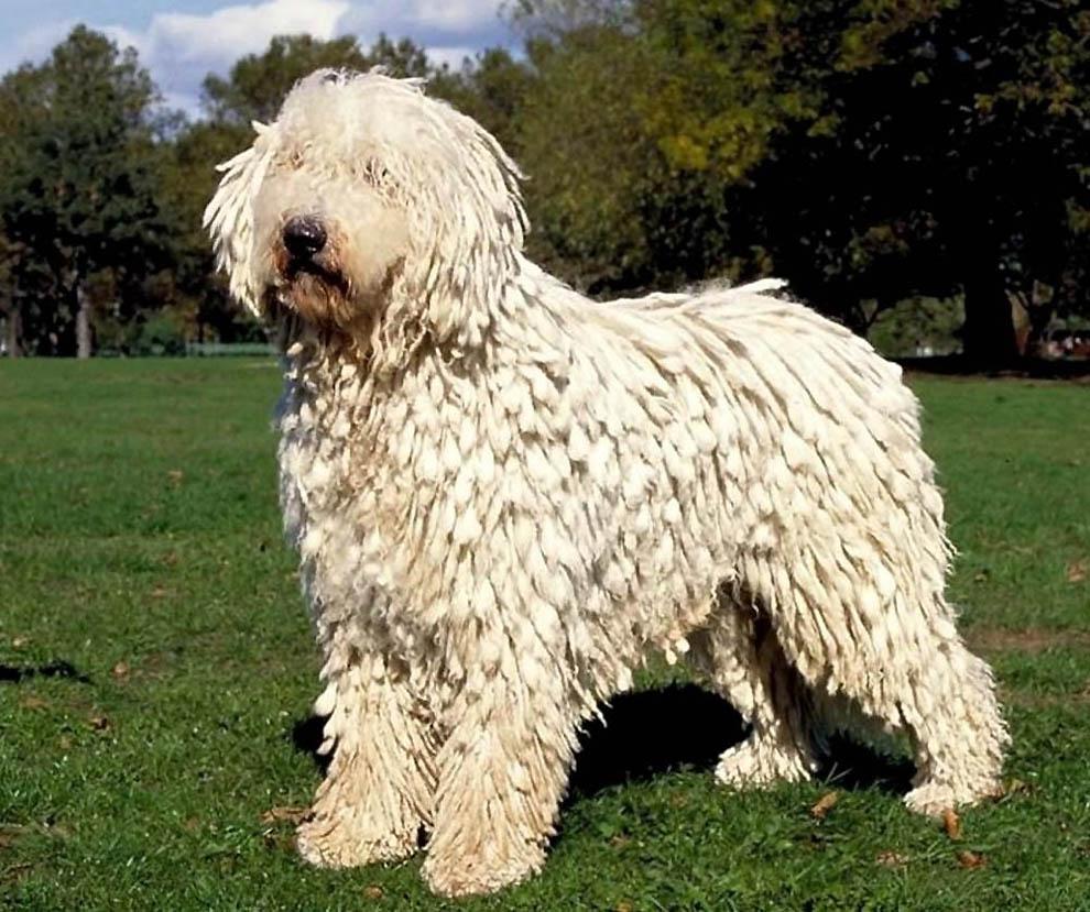 7 Необычные породы собак