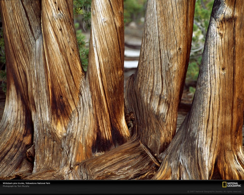 784 990x792 Узоры в природе: деревья