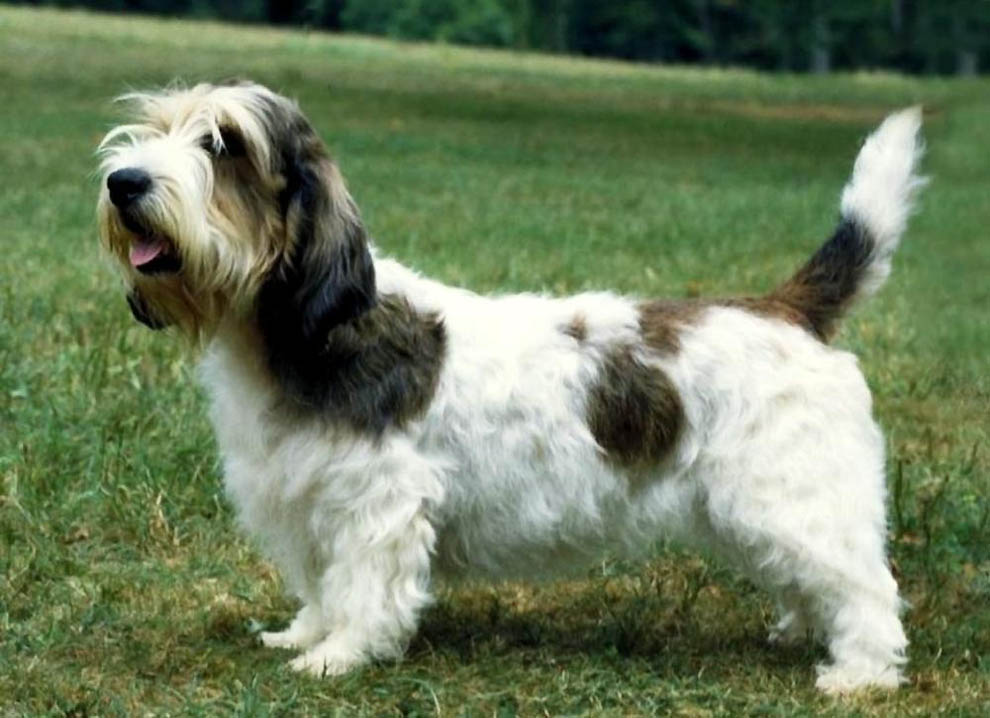 9 Необычные породы собак
