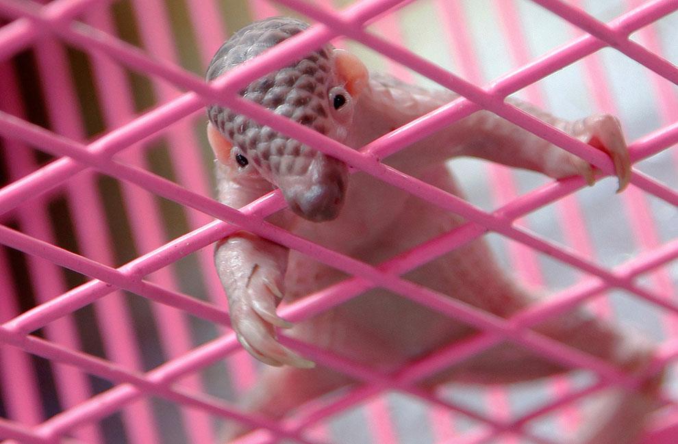 animal20 Hewan dalam Berita