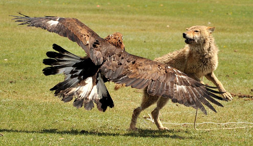animal38 Hewan dalam Berita