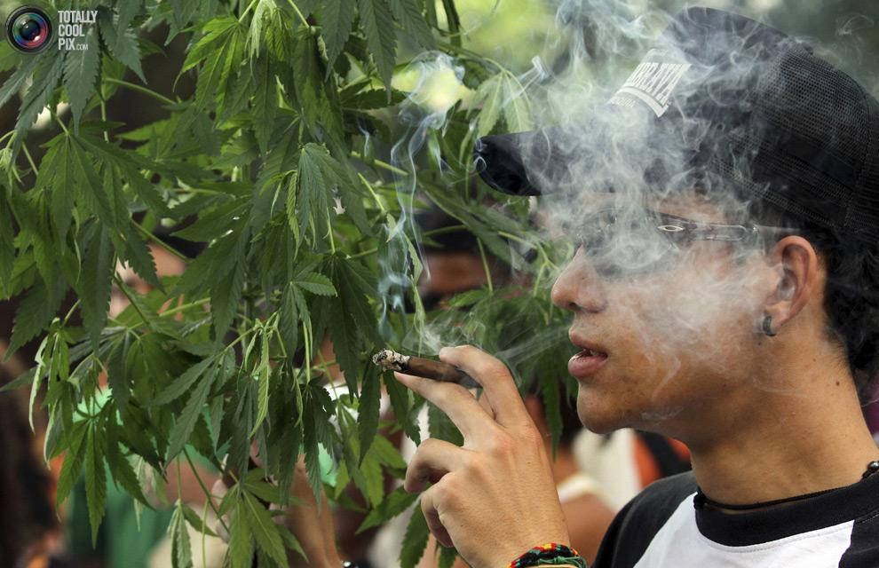 Вы курили коноплю почему сохнут кончики листьев у конопли