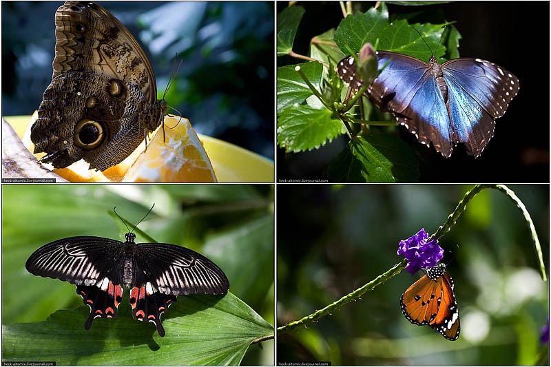 000036 Бабочковый рай
