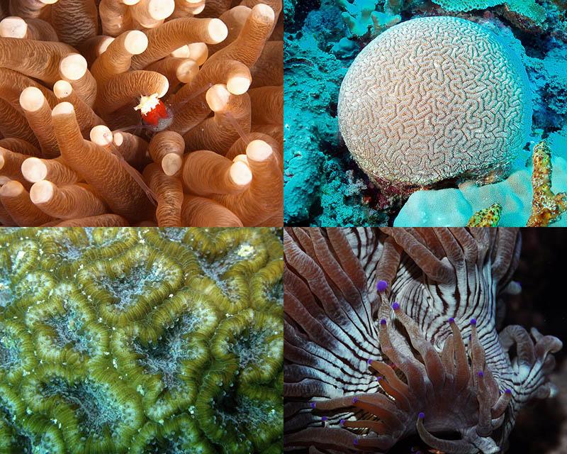 000066 Кораллы, нуждающиеся в защите
