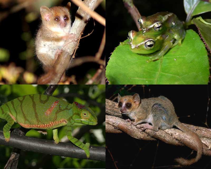 0003 Удивительные создания Мадагаскара