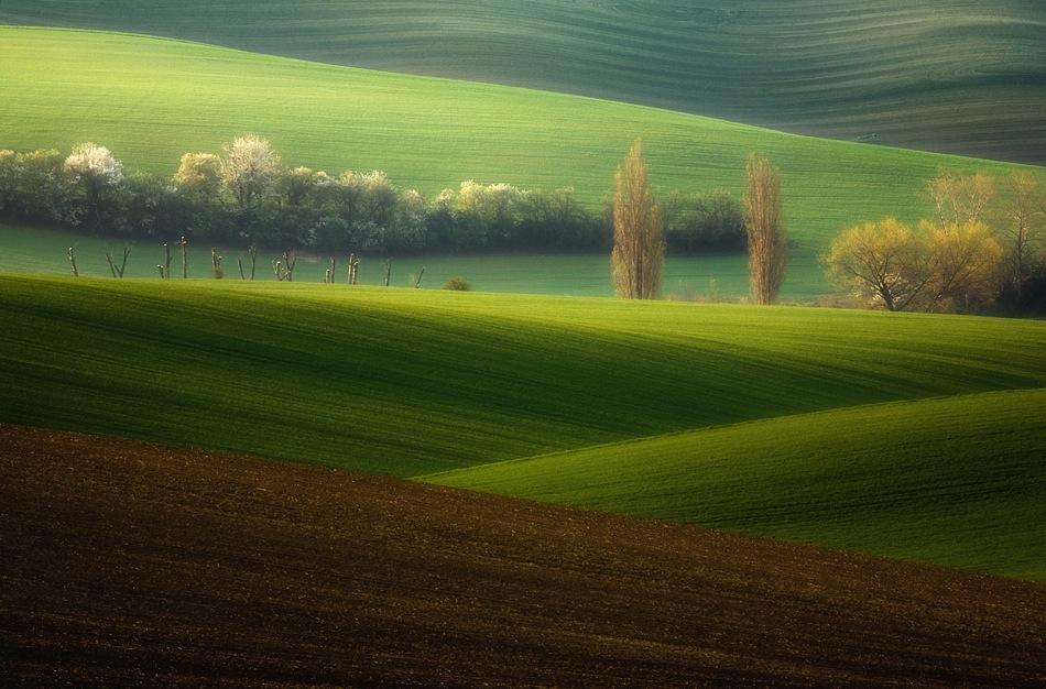 10100 Потрясающие зеленые поля