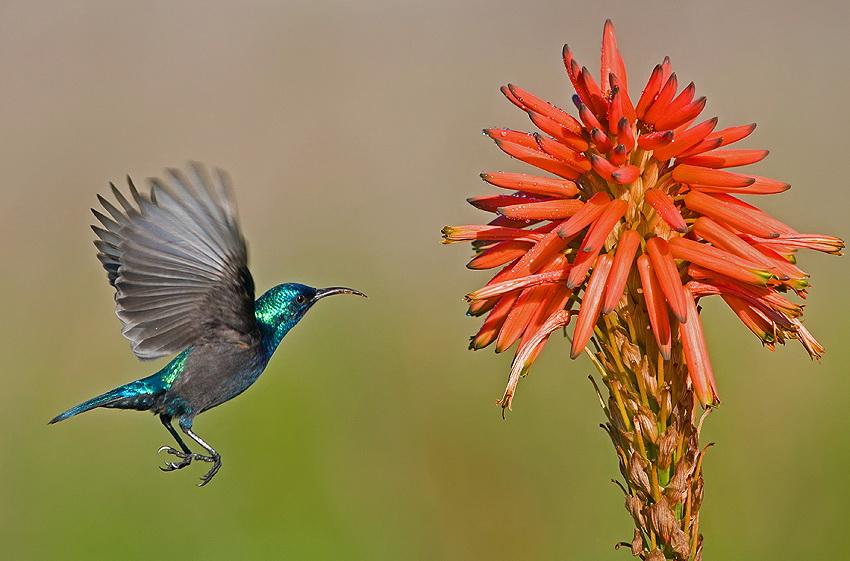 106 Удивительные фотографии птиц Яки Зандера