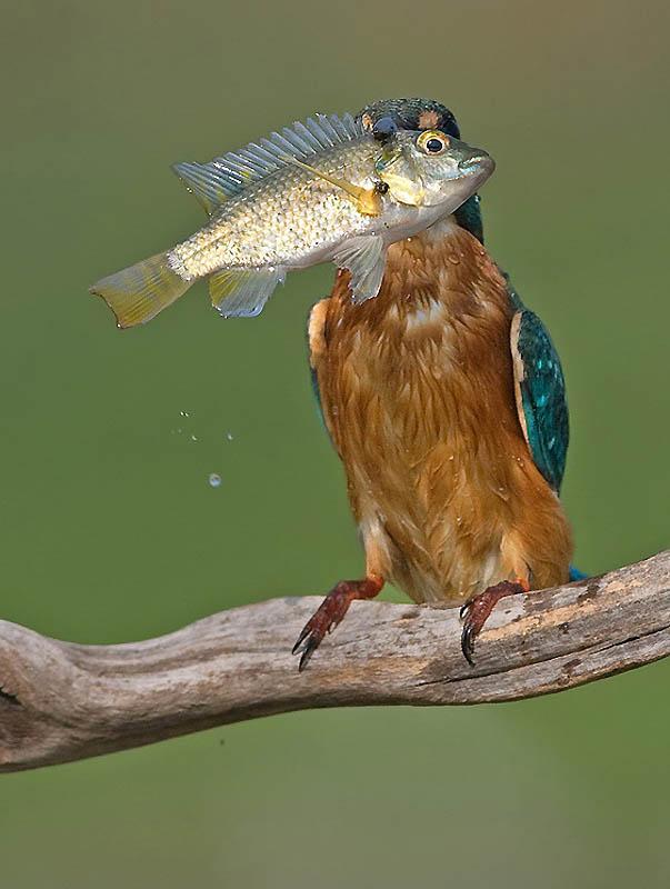 1110 Удивительные фотографии птиц Яки Зандера