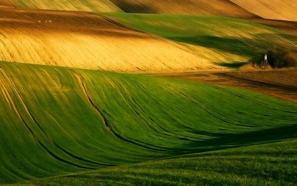 11133 Потрясающие зеленые поля