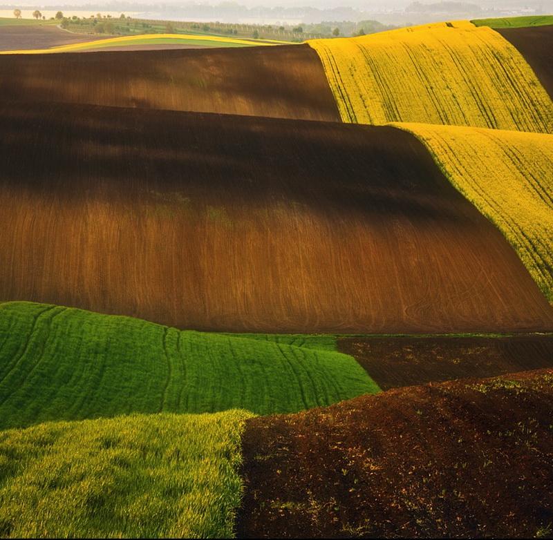 12111 Потрясающие зеленые поля