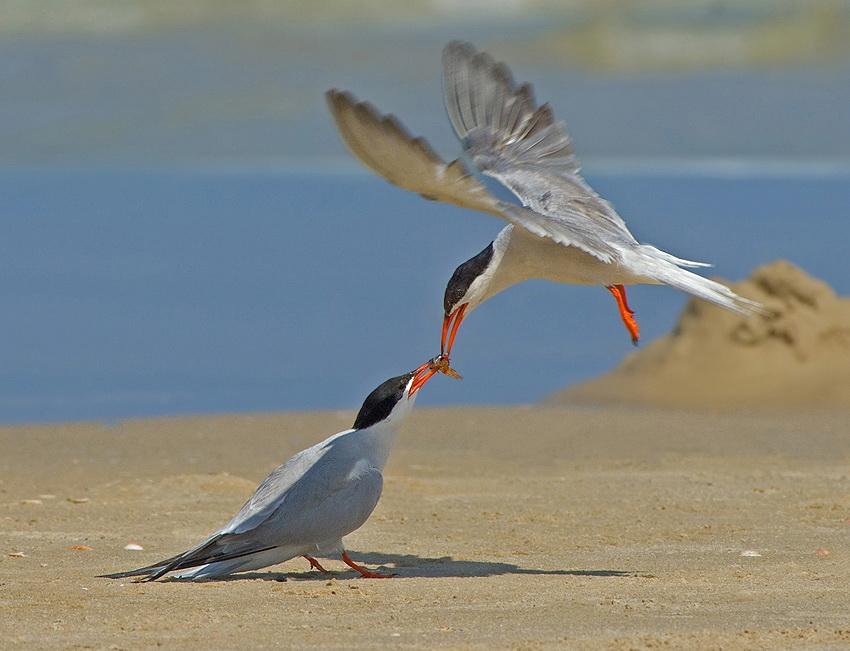 126 Удивительные фотографии птиц Яки Зандера