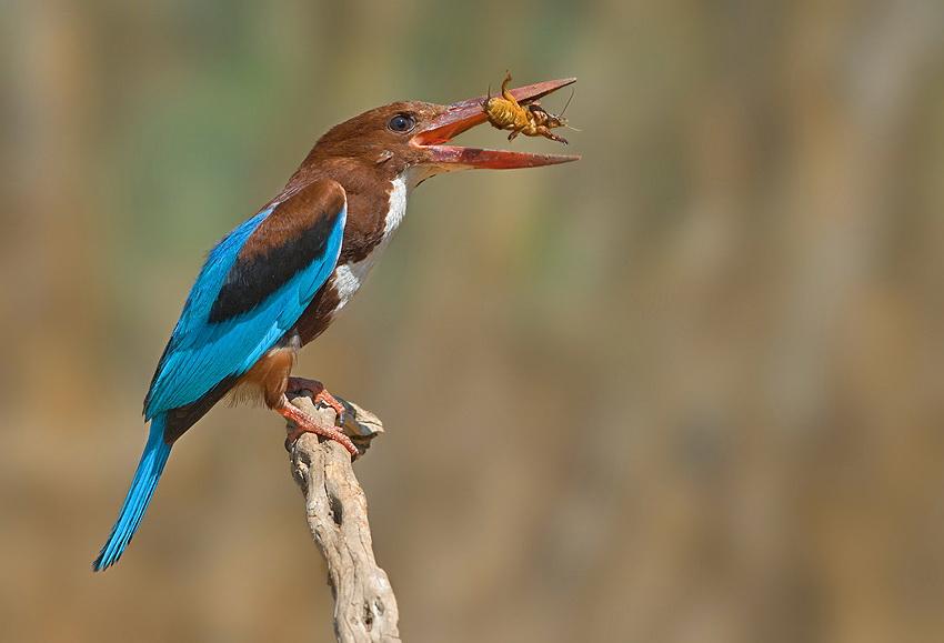 136 Удивительные фотографии птиц Яки Зандера
