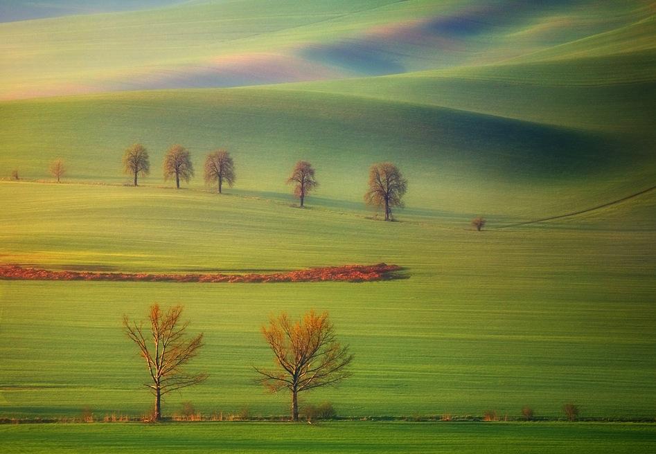 1394 Потрясающие зеленые поля
