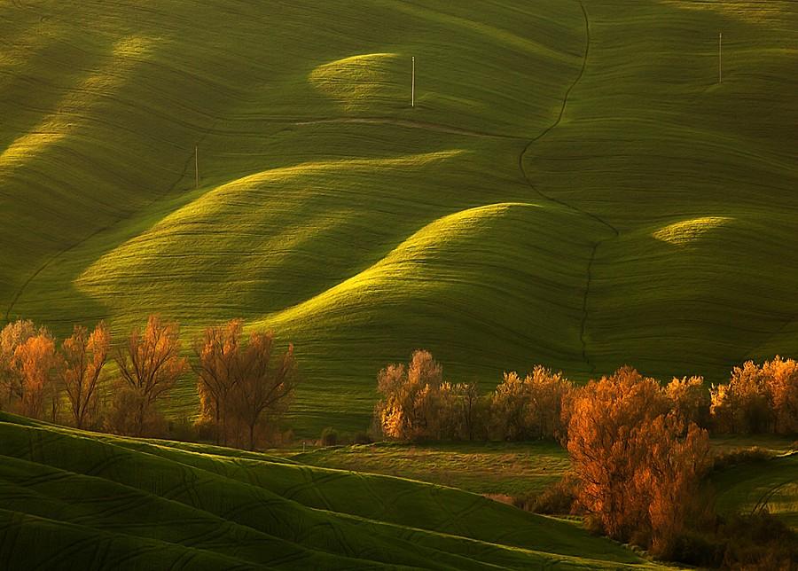 1489 Потрясающие зеленые поля