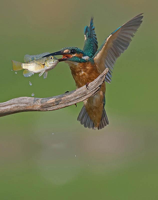 155 Удивительные фотографии птиц Яки Зандера