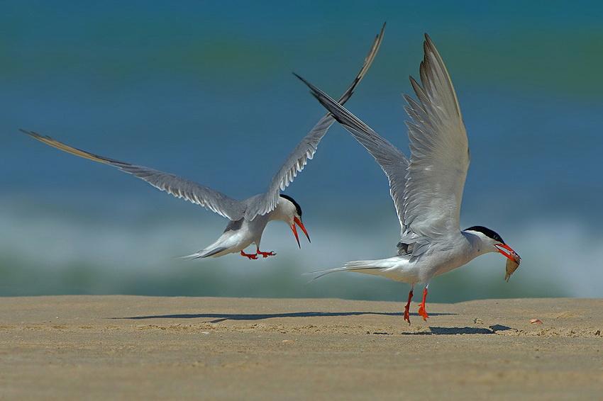 165 Удивительные фотографии птиц Яки Зандера