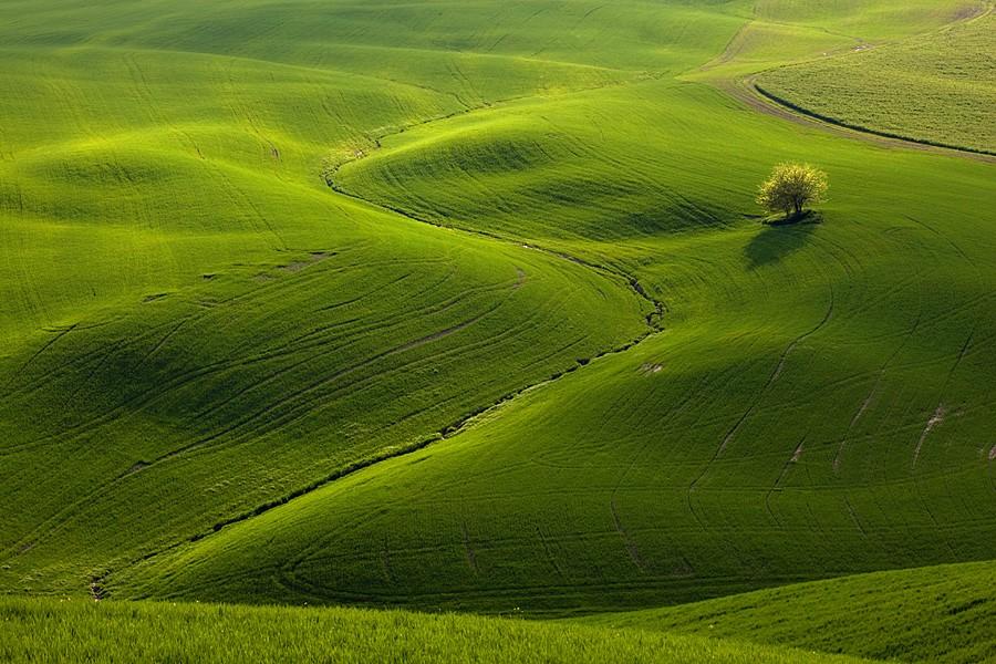 1683 Потрясающие зеленые поля