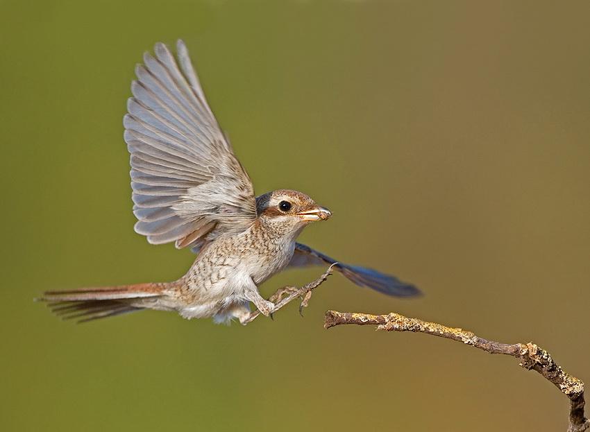 175 Удивительные фотографии птиц Яки Зандера