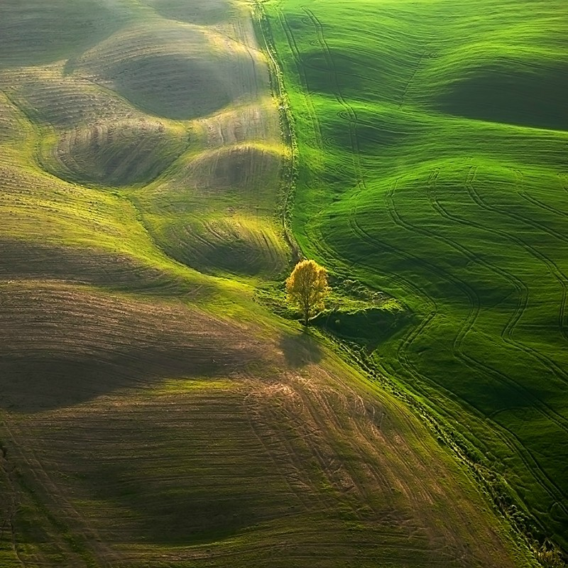 1780 Потрясающие зеленые поля
