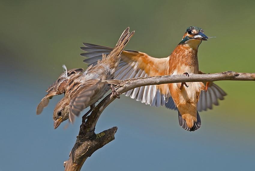 185 Удивительные фотографии птиц Яки Зандера