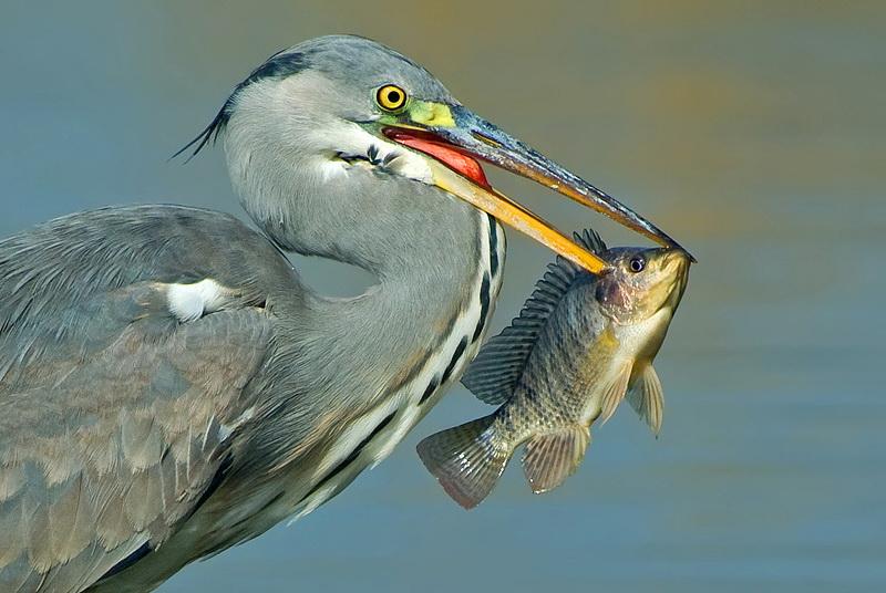193 Удивительные фотографии птиц Яки Зандера