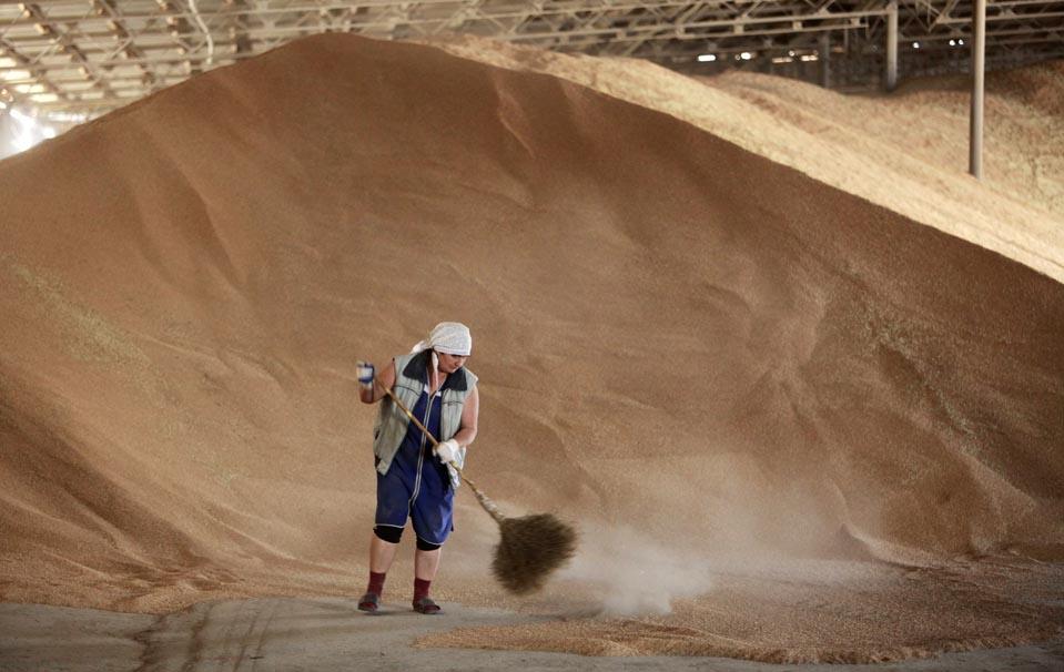 Госрезерв пополнили зерном. Украина готовится повышению цен