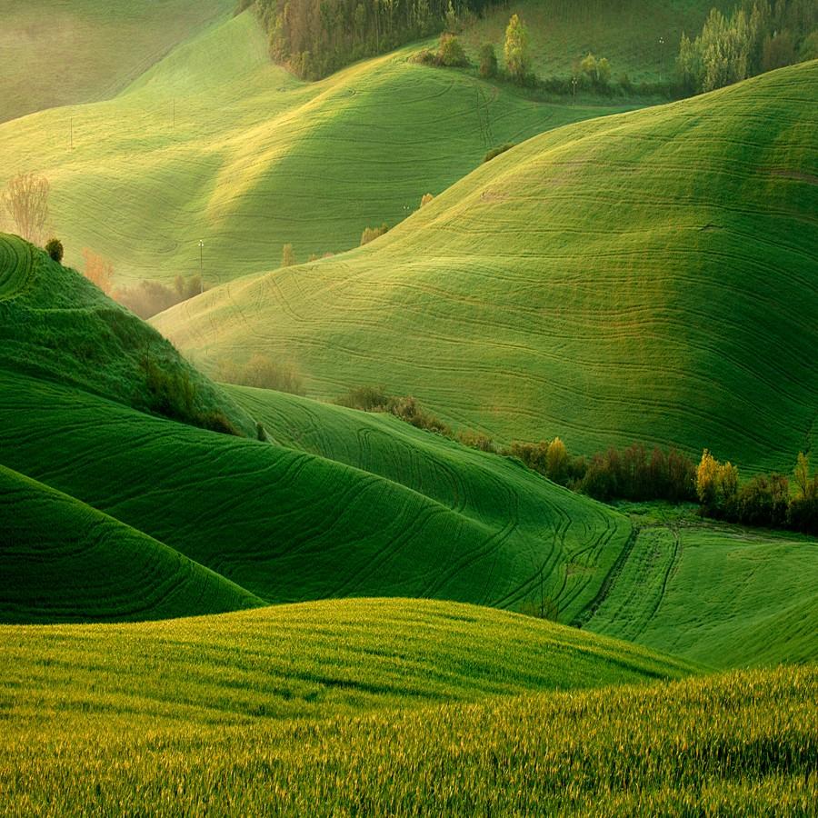 1972 Потрясающие зеленые поля