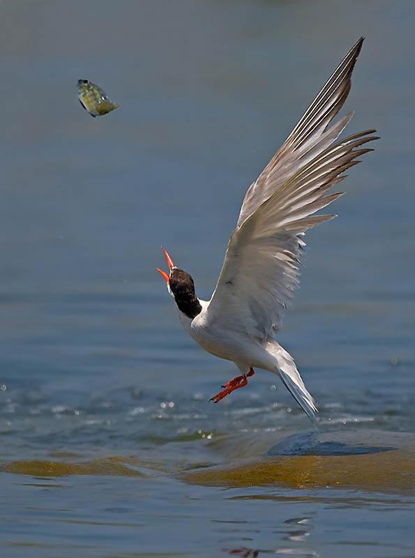 203 Удивительные фотографии птиц Яки Зандера