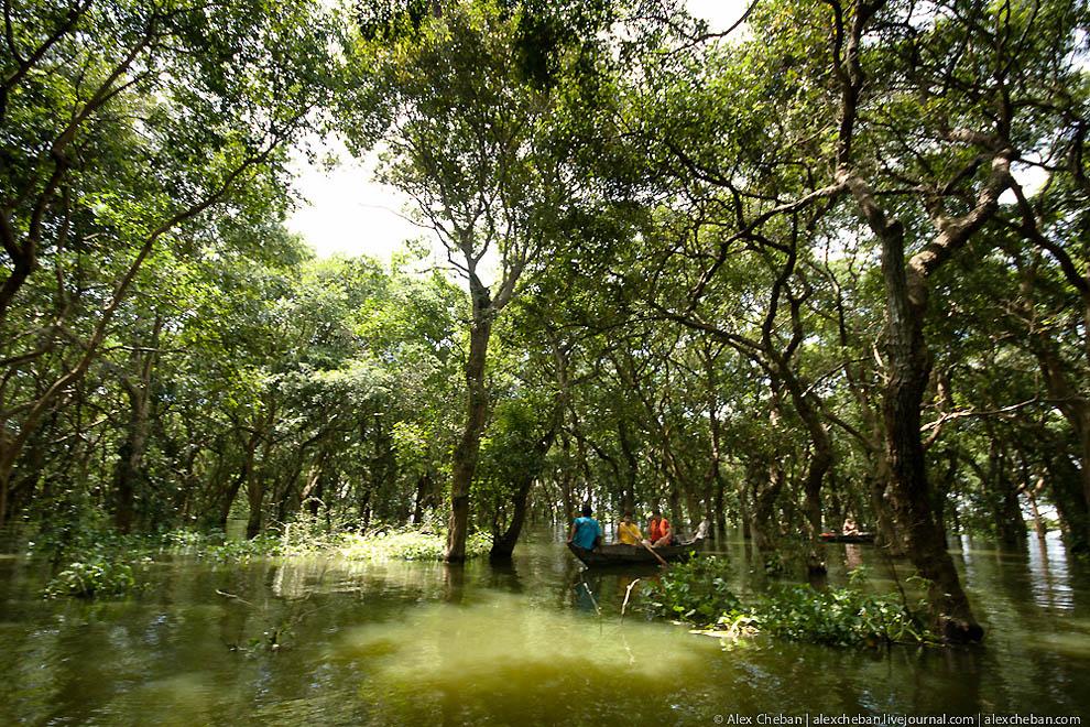 Tergenang hutan di Kamboja