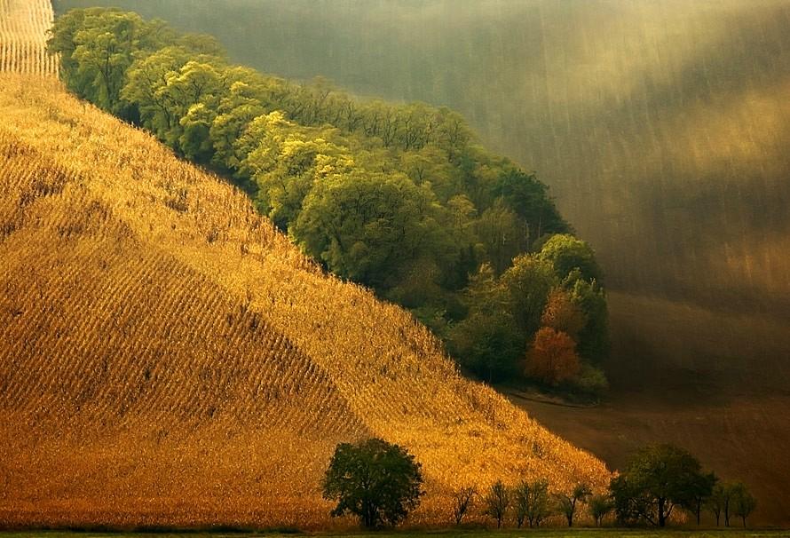 21113 Потрясающие зеленые поля