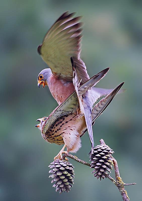 217 Удивительные фотографии птиц Яки Зандера