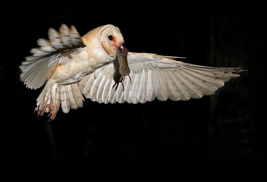 224 Удивительные фотографии птиц Яки Зандера