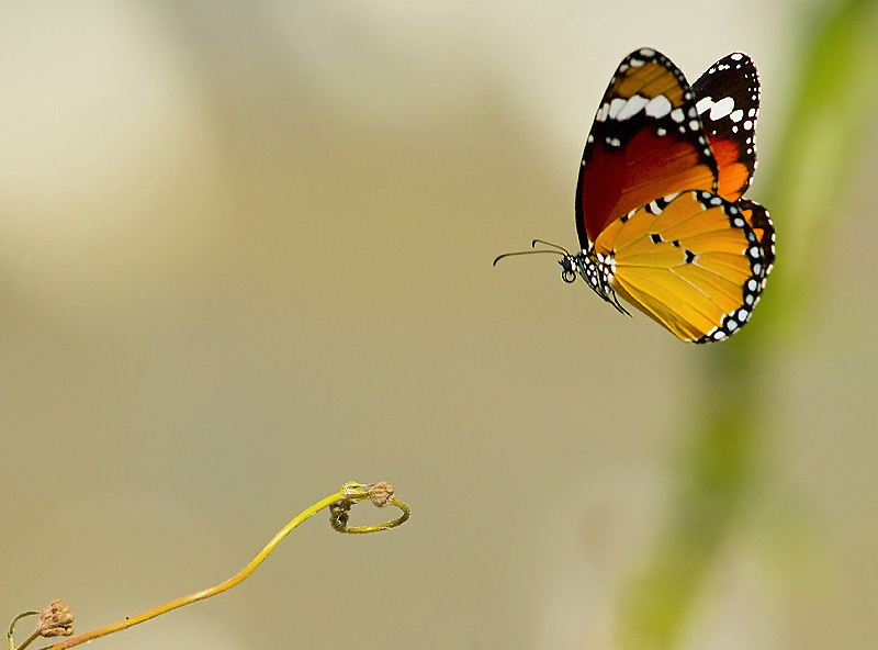 233 Удивительные фотографии птиц Яки Зандера