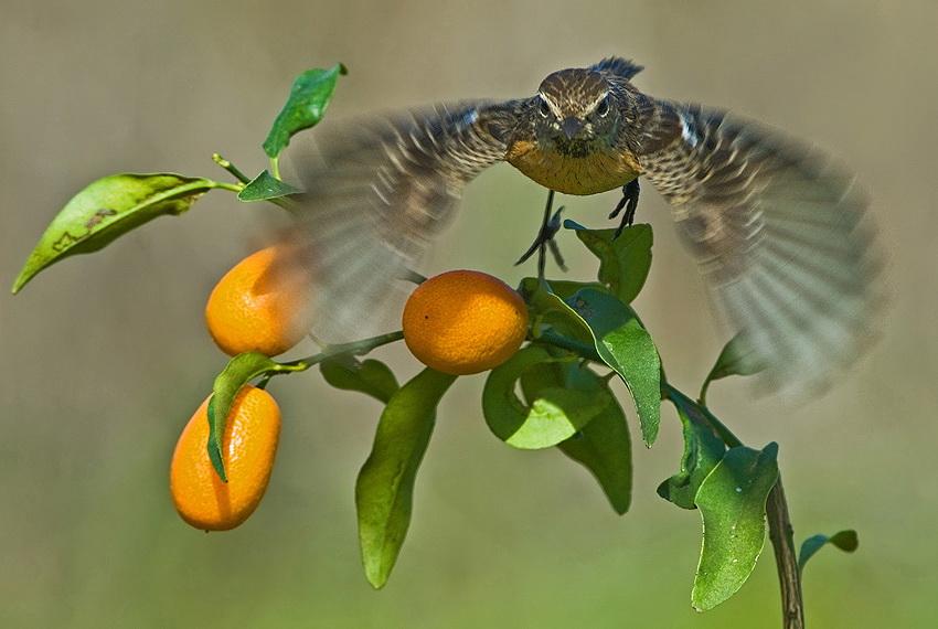 243 Удивительные фотографии птиц Яки Зандера