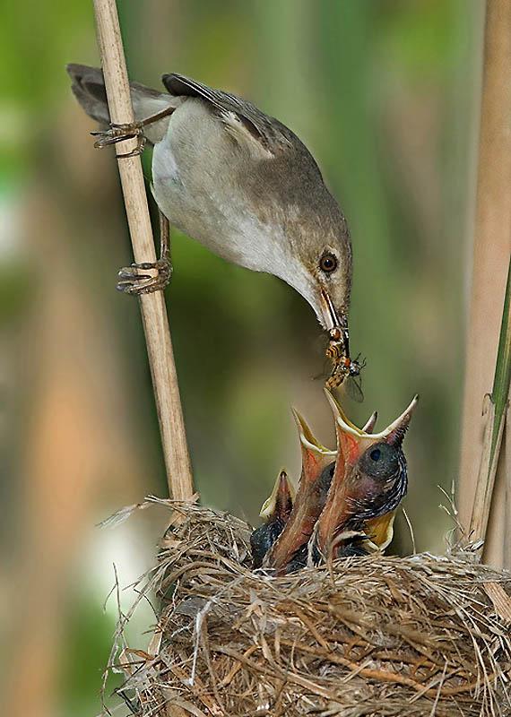 253 Удивительные фотографии птиц Яки Зандера