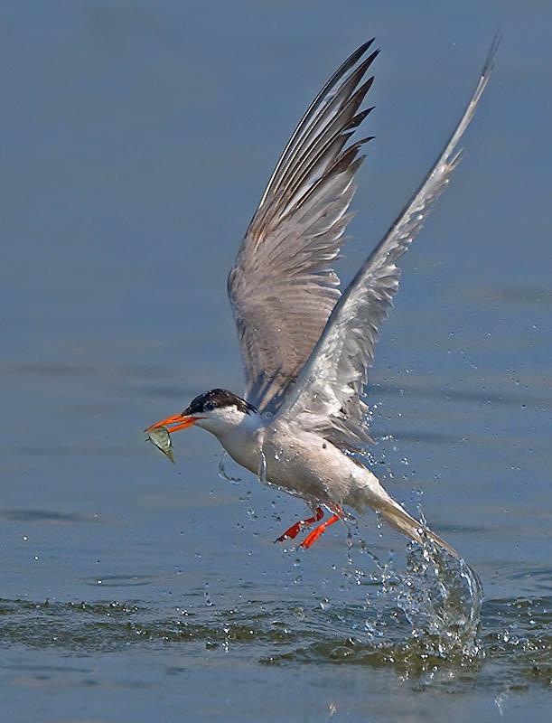263 Удивительные фотографии птиц Яки Зандера