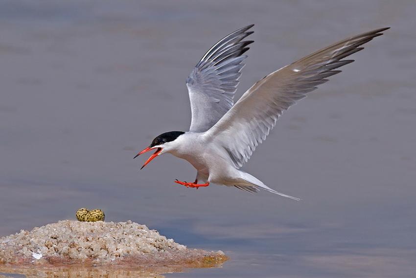 273 Удивительные фотографии птиц Яки Зандера