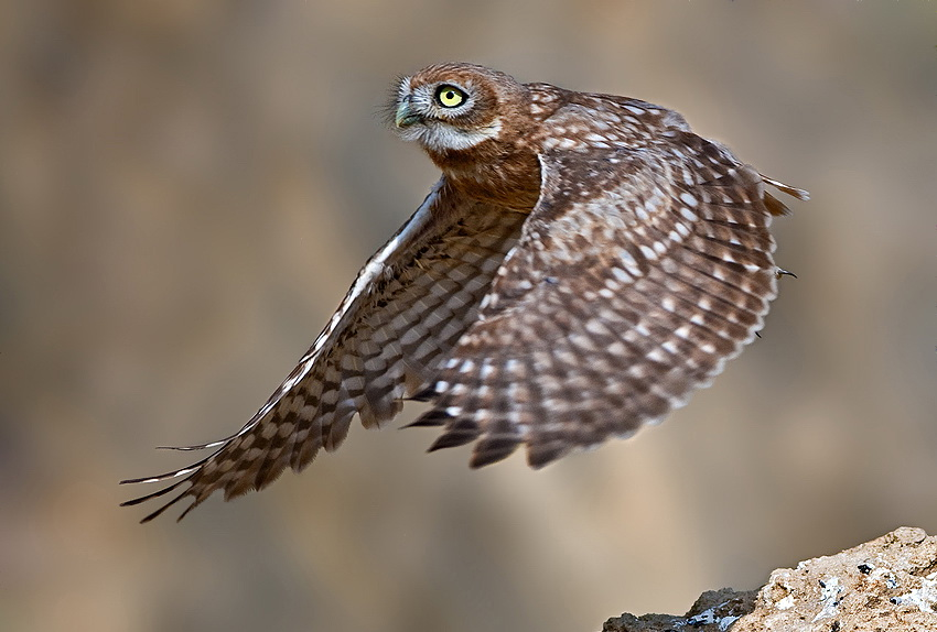283 Удивительные фотографии птиц Яки Зандера