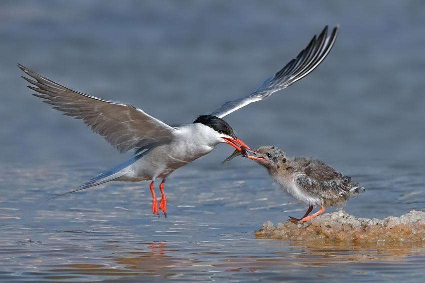 303 Удивительные фотографии птиц Яки Зандера
