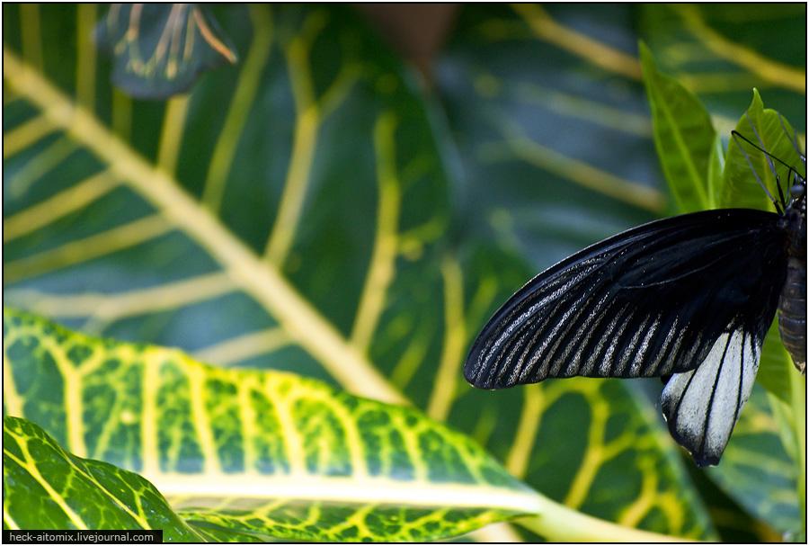 Бабочковый рай. [2011, Канада, Кембридж]