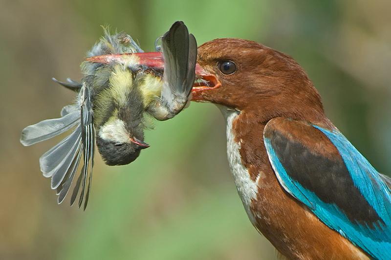 317 Удивительные фотографии птиц Яки Зандера
