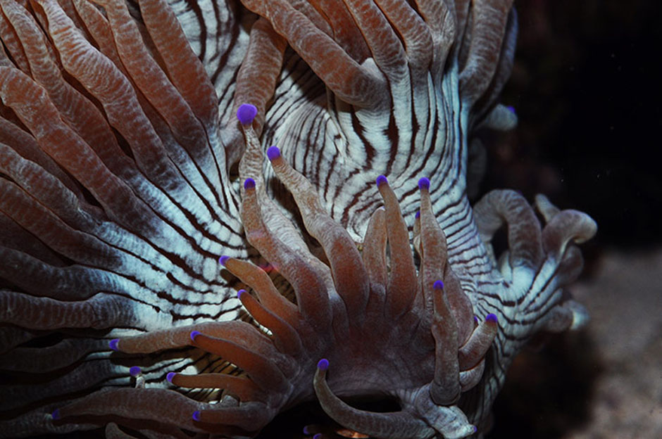 Кораллы, нуждающиеся в защите