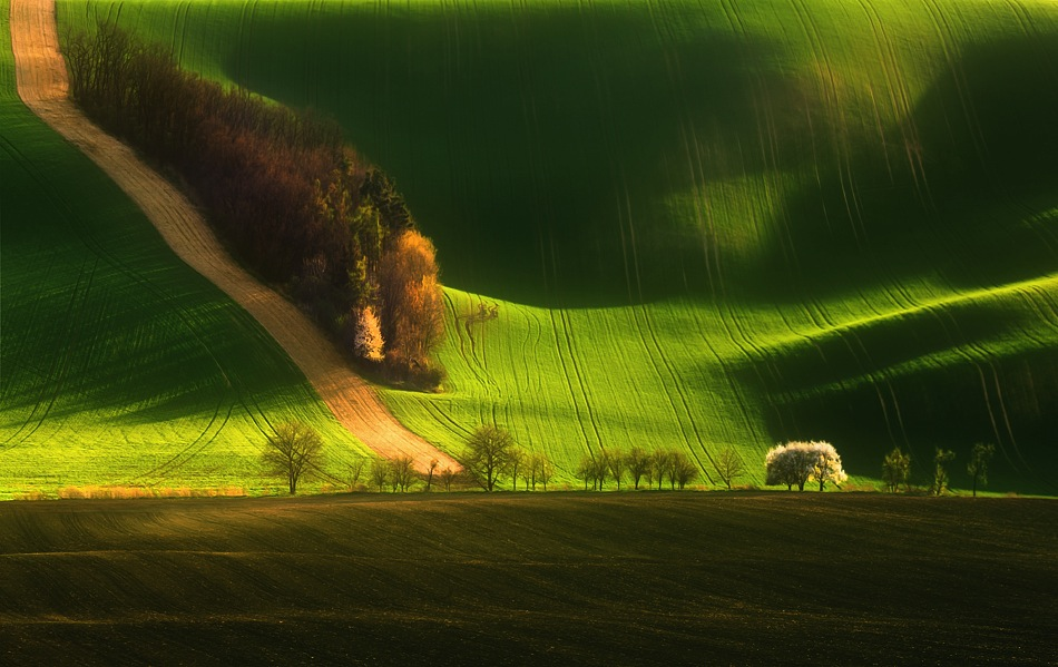 3198 Потрясающие зеленые поля